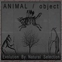 A.n.i.m.a.l. / Object - Evolution by natural selection